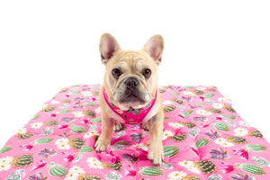 Big & Little Dogs - On The Go Pet Mat - Plant One on Me