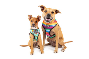 Big & Little Dogs Reversible Dog Harness - Mexican Fiesta