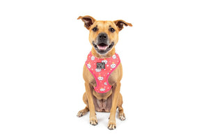 Big & Little Dogs Reversible Dog Harness - Slumber Party
