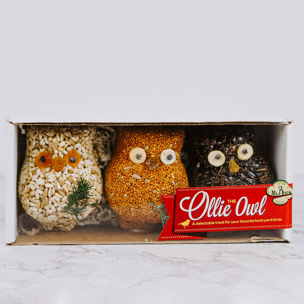 Birdseed Owl Friends