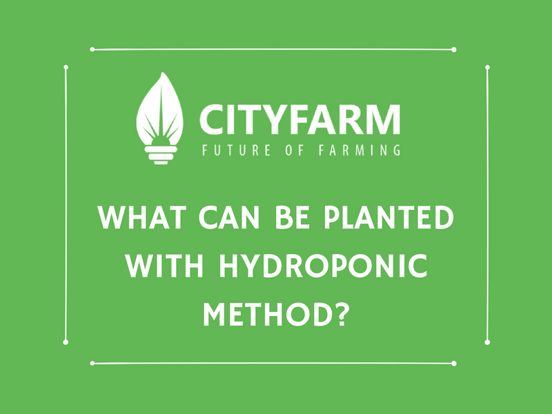 What Can be Planted with Hydroponic Method?