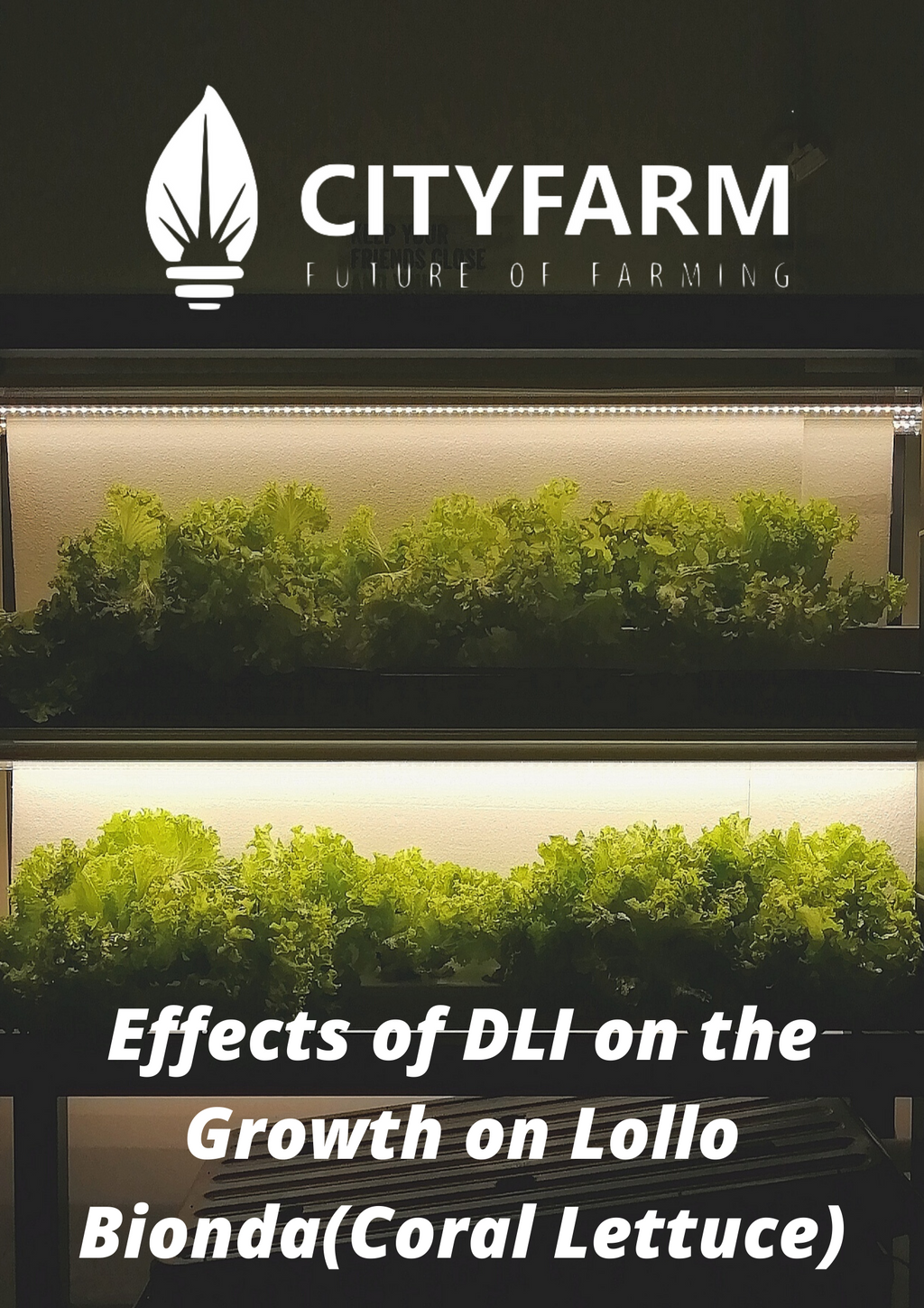 [Research] Effects of DLI on the Growth of Lollo Bionda(Coral Lettuce)