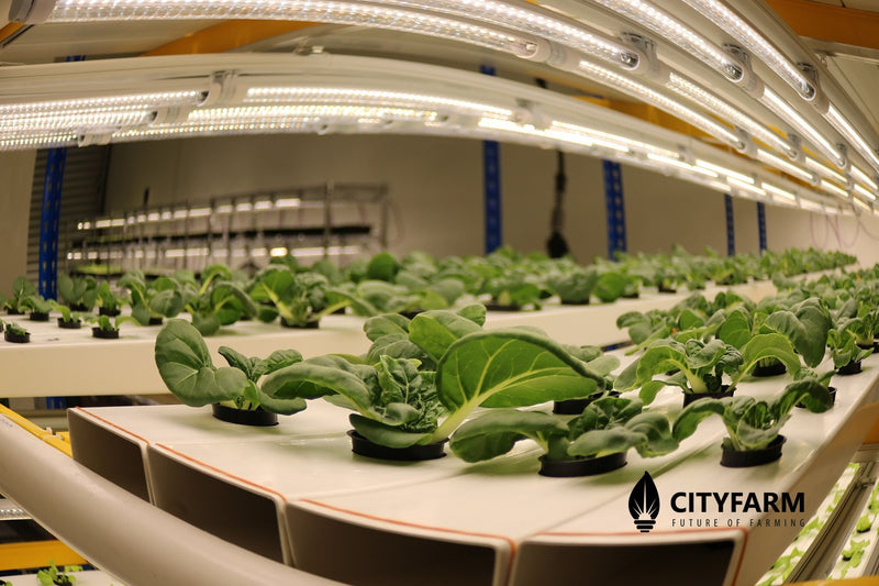 What is Indoor Farm?