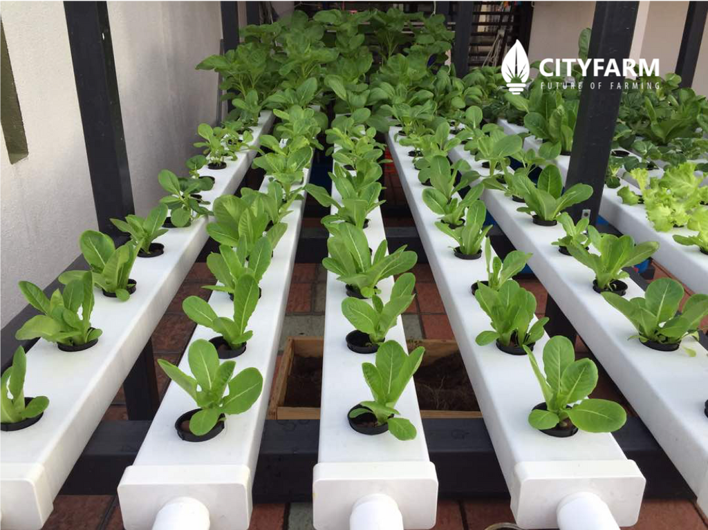 Outdoor Hydroponics Farm Set For Family (CityFarm Malaysia)