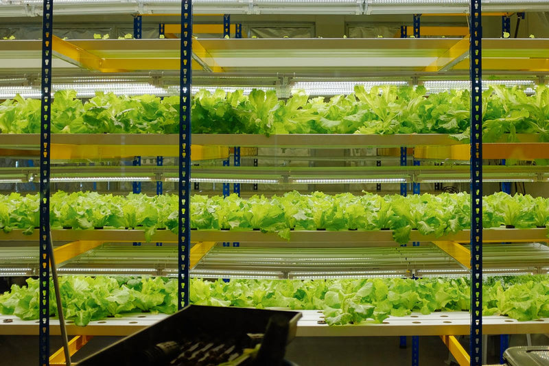 Hydroponics Farming Course with FREE Farm Set (March 2019) - CityFarm