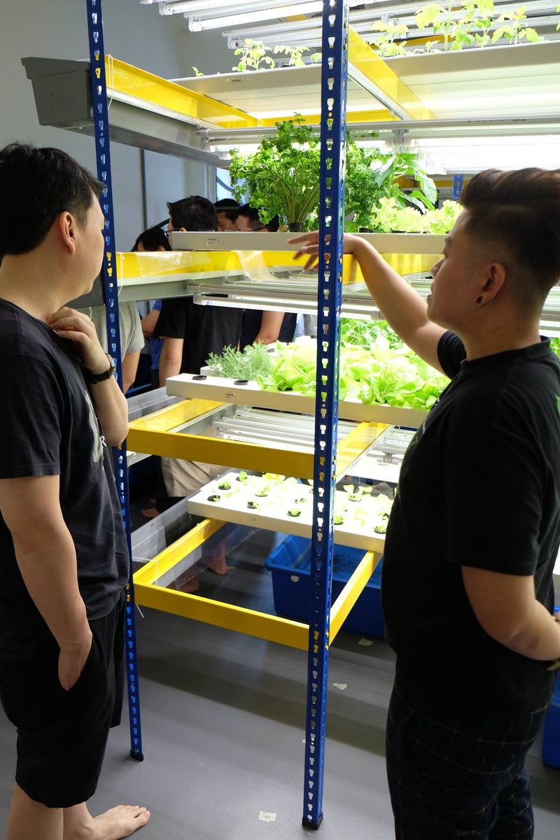 Hydroponics Farming Course with FREE Farm Set (March 2020) - CityFarm