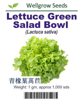 WHT - Lettuce Green Salad Bowl