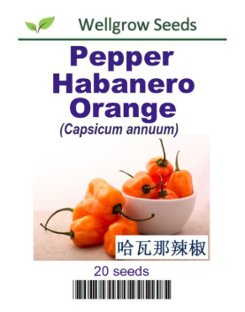 WHT - Pepper Habenero Orange - CityFarm