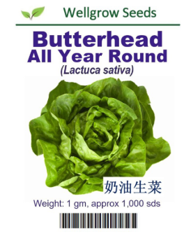 WHT - Butterhead All Year Round - CityFarm