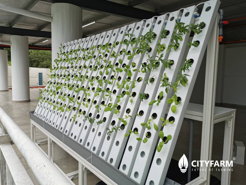 CityFarm Vertical Garden (Green Wall)