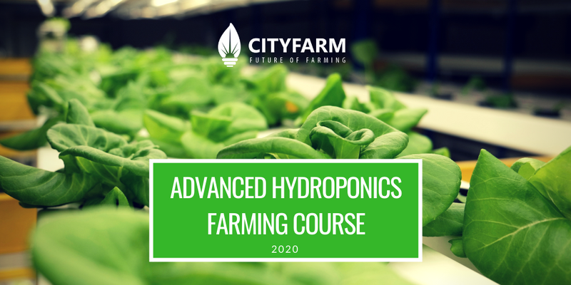 Hydroponics Farming Course with FREE Farm Set (Feb 2020)