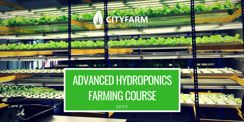 Hydroponics Farming Course with FREE Farm Set (Apr 2019) - CityFarm