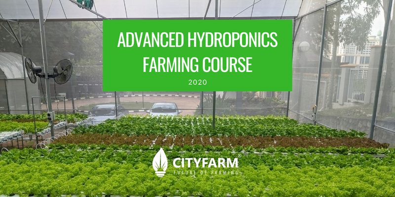 Hydroponics Farming Course with FREE Farm Set (Dec 2020)