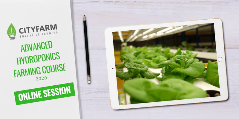 Hydroponics Farming Online Course with FREE Farm Set (16 May 2020) - CityFarm