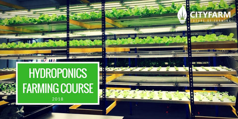 Hydroponics Farming Course with FREE farm - RM449.90