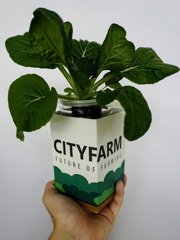 City Window Farm (All Inclusive Beginner Kit)