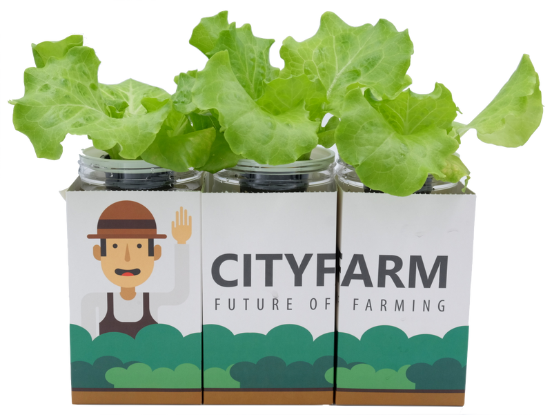 City Window Farm (All Inclusive Beginner Kit) - CityFarm