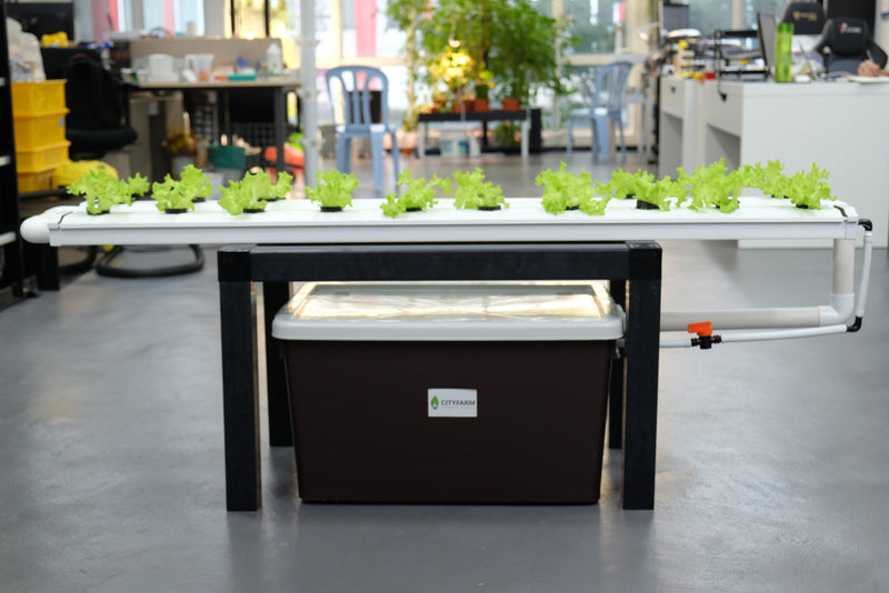 City Balcony Farm (NFT System) 2020 Model - CityFarm