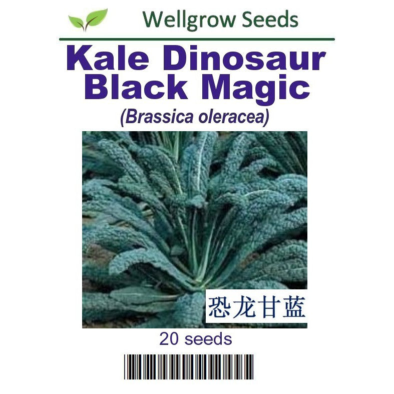 WHT - Kale Dinosaur Black Magic - CityFarm