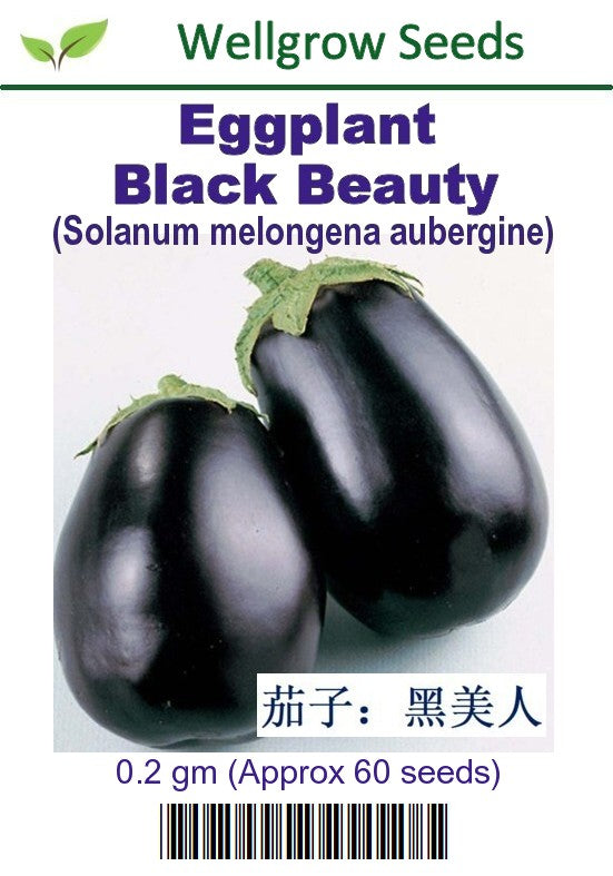 WHT - Eggplant Black Beauty - CityFarm