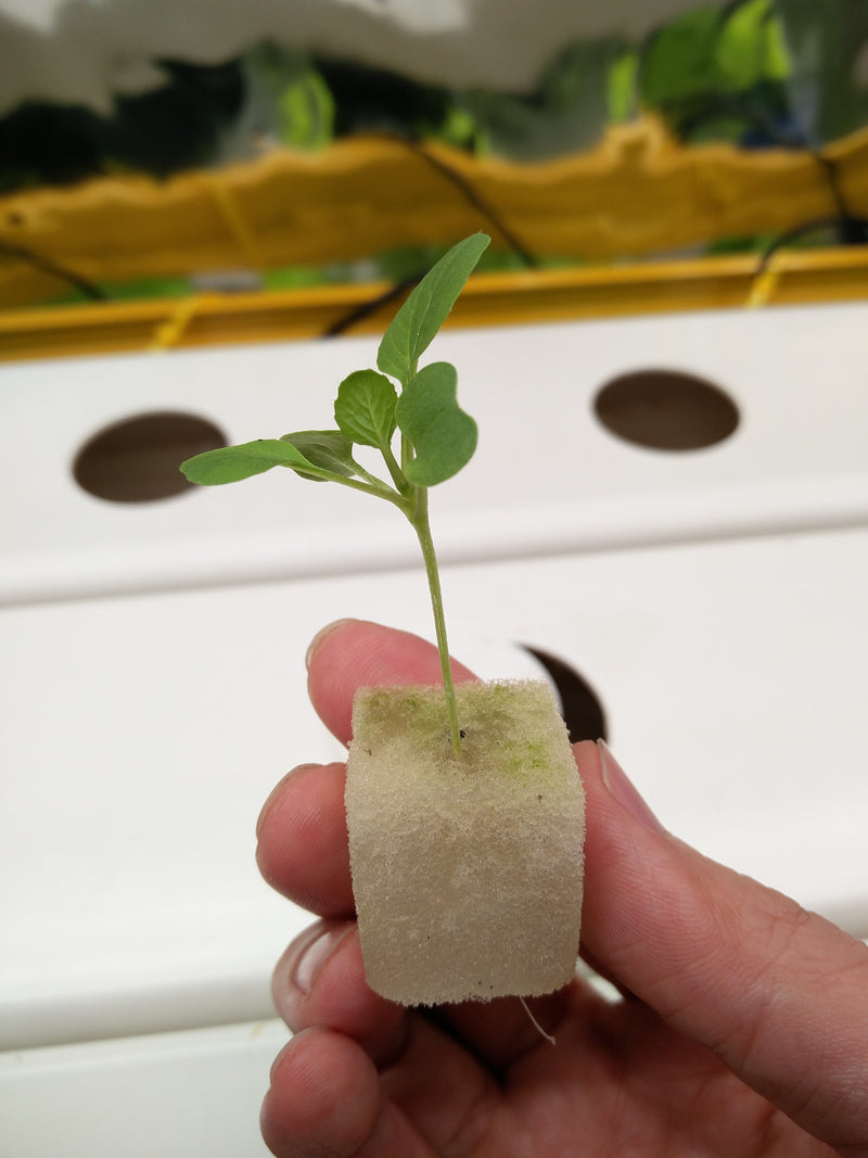 Germination Sponge (1 sheet = 117 Cubes) - CityFarm