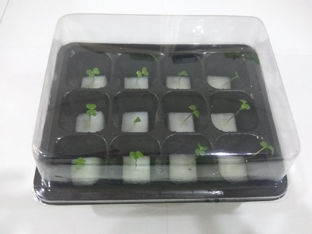 Mini Germination Box (Set of 2) - CityFarm