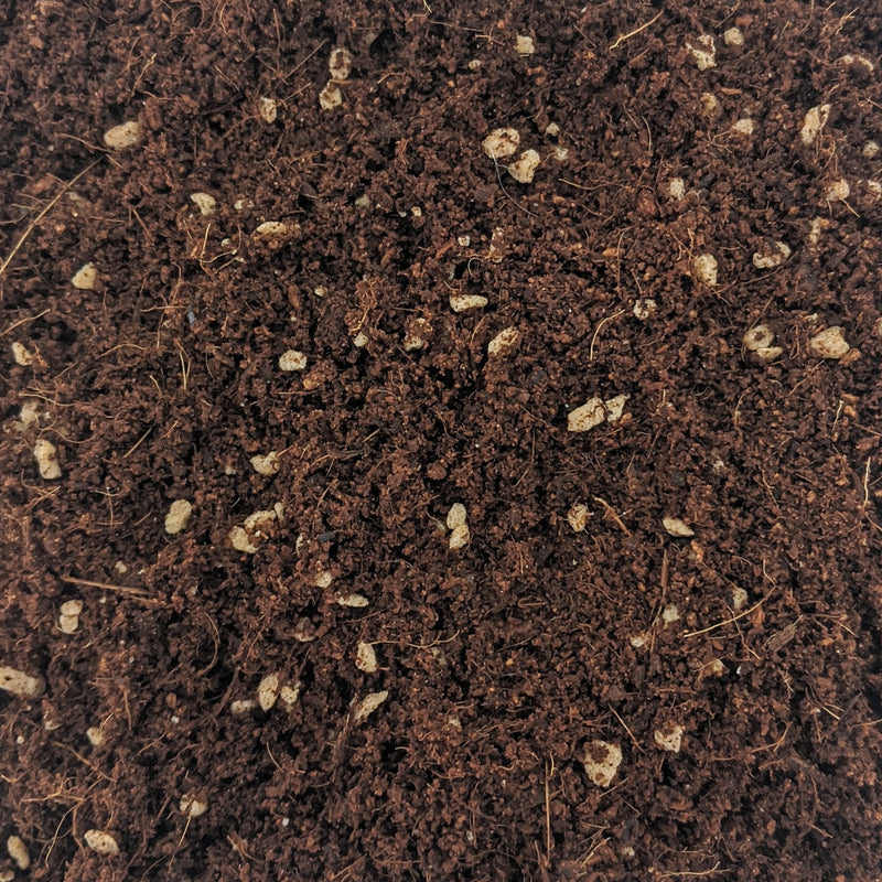 Coco Mix (80% Cocopeat 20% Perlite)