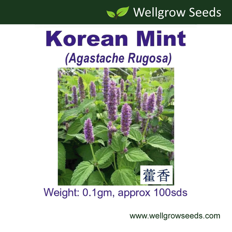 WHT - Korean Mint (approx. 100 sds )