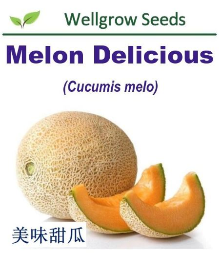 WHT- Melon Delicious (50sds) 美味甜瓜 - CityFarm