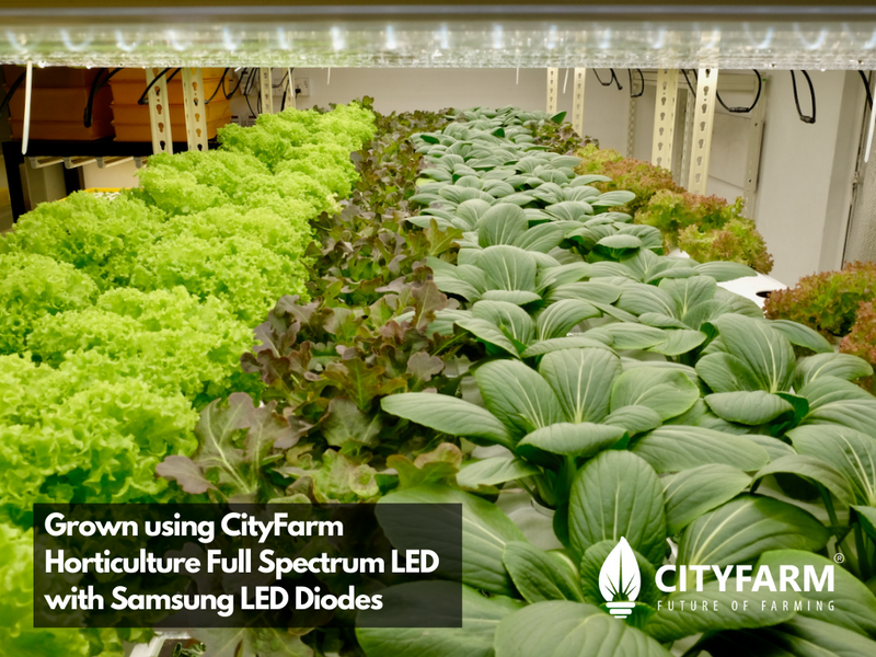 4 Feet CityFarm Horticulture Full Spectrum LED T8 Growlight - Wire Link Connection