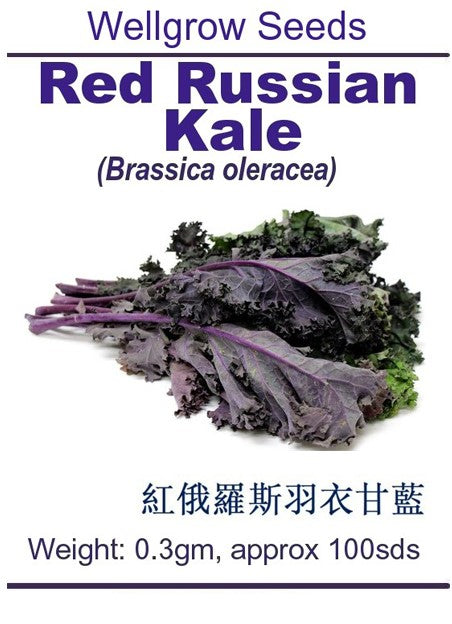 WHT - Red Russian Kale - CityFarm