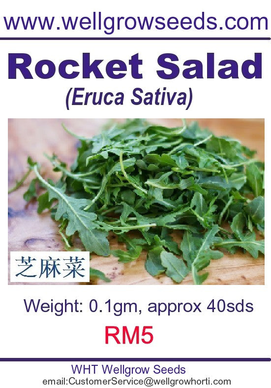 WHT - Rocket Salad