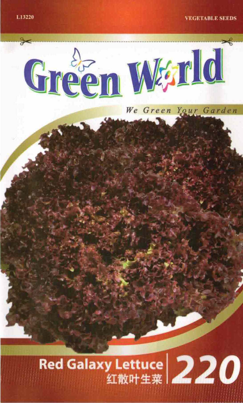 Red Galaxy Lettuce - CityFarm