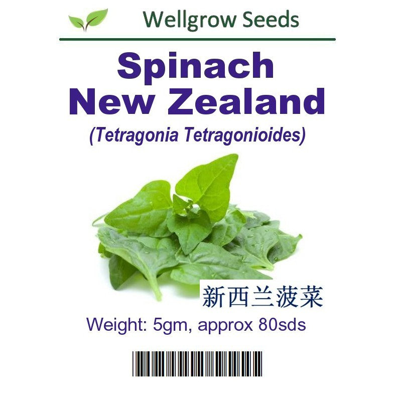 WHT-Spinach New Zealand - CityFarm