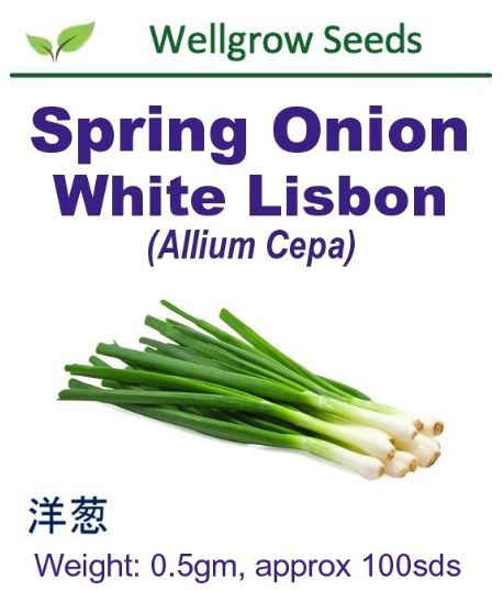 WHT- Spring Onion White Lisbon (0.5gm, approx 100sds) 白洋葱 - CityFarm