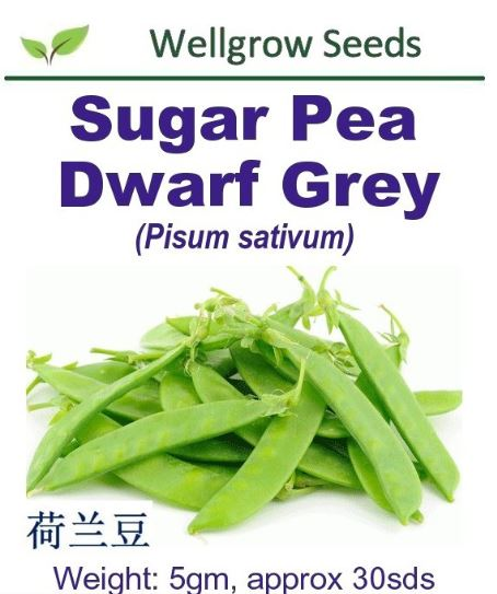 WHT- Sugar Pea Dwarf Grey Seeds (5gm, approx 30sds) 荷兰豆 - CityFarm
