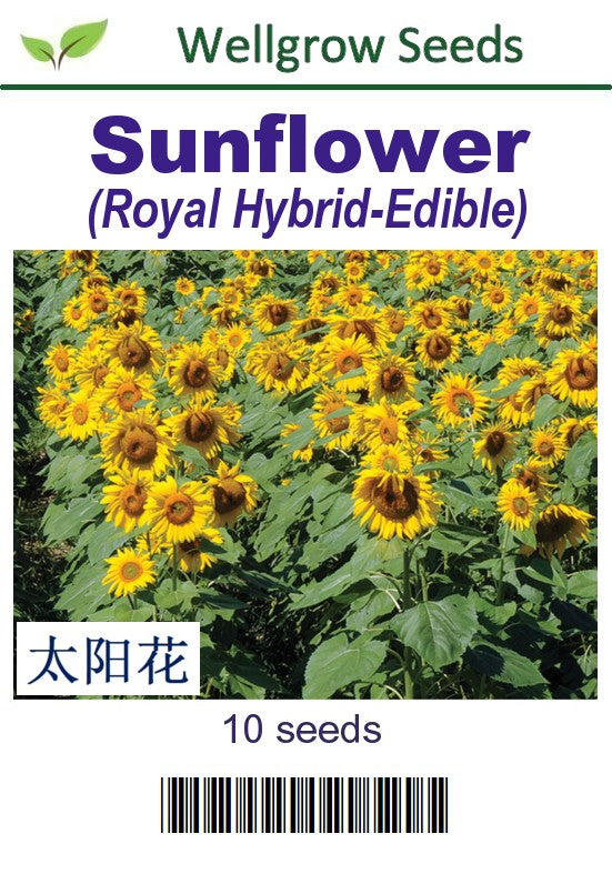 WHT - Sunflower (Edible) - CityFarm