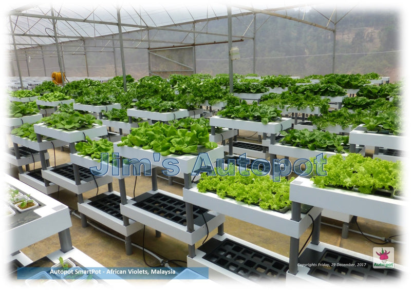 Basic Hydroponics Course with Autopot Technology by Jim Fah - CityFarm