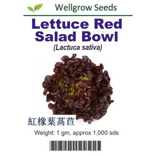 Lettuce Red Salad Bowl Seeds(1gm, approx. 1000 seeds) - CityFarm