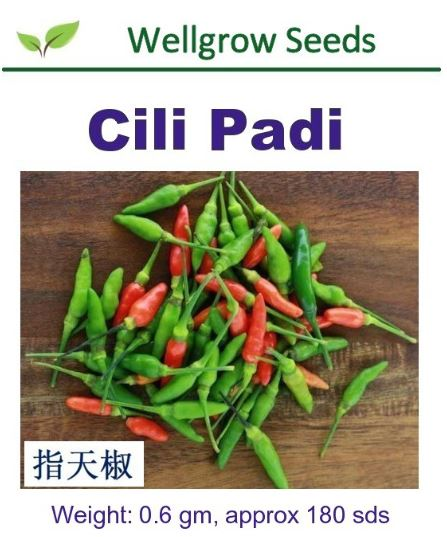 WHT- Cili Padi Seeds (0.6gm, approx 180 sds) 指天椒 - CityFarm