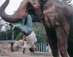 Man-eating elephant reported in India
