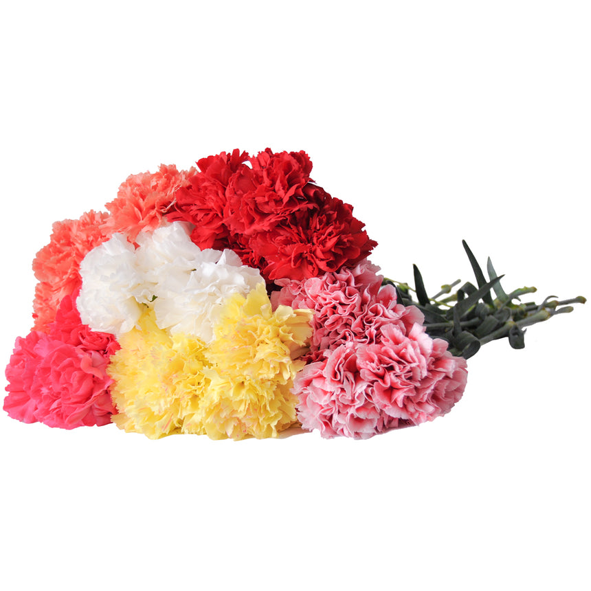 Carnations Valentine's day