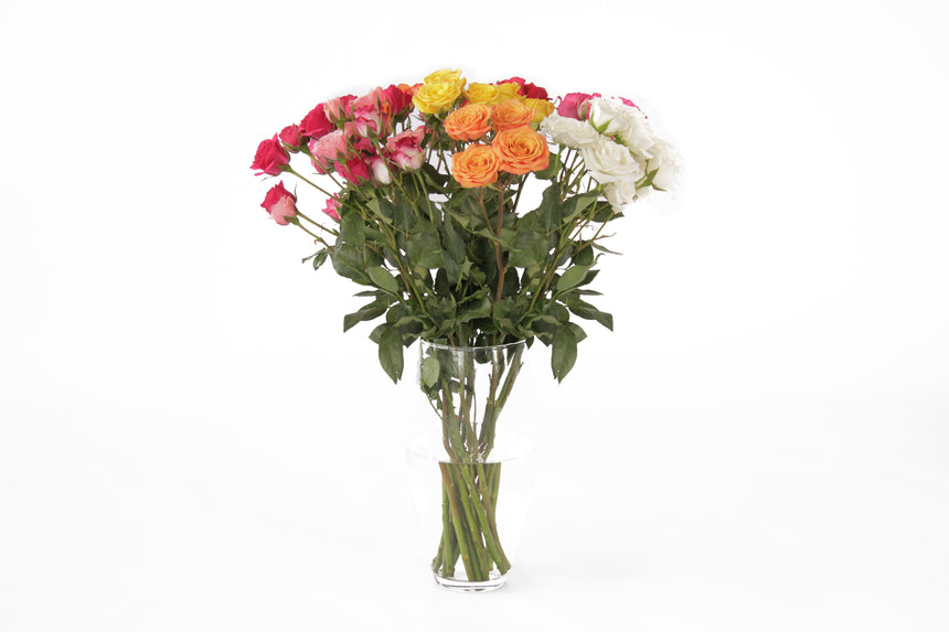 This assorted color spray roses and many more can be found in 48 Fresh. As a wholesale flower seller and our exclusive shipping and logistics we assure our clientes the freshest flowers in the market.