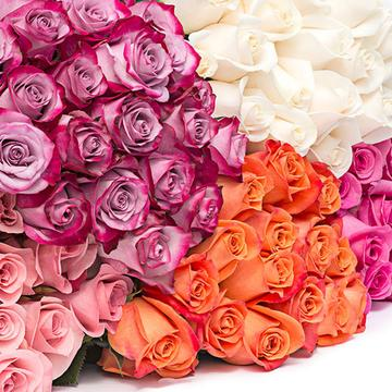 Color roses, sorted roses, roses, red roses, whit roses, pink roses, orange roses, pink roses