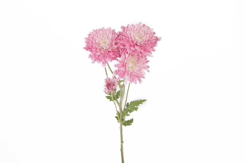 Pink flowers express romantic feelings and are associated with sensitivity and playfulness. This single stem of light pink cushion flowers are a perfect gift.
