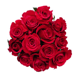 Red Roses Valentine's day.