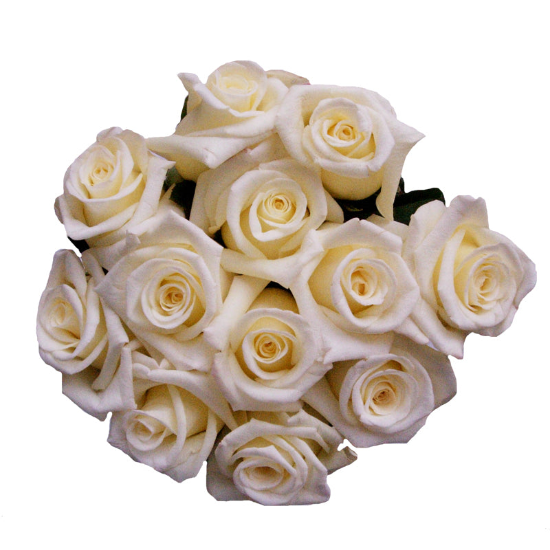 A dozen white roses showing, perfect for brides and weddings