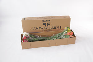 48 Fresh special shipper. In this box your orange-yellow bicolor alstroemerias will arrive in a great conditions.