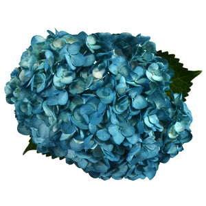 Aqua painted fresh cut hydrangea flowers. Hydrangeas are used to express gratitude and they represent genuine emotions.