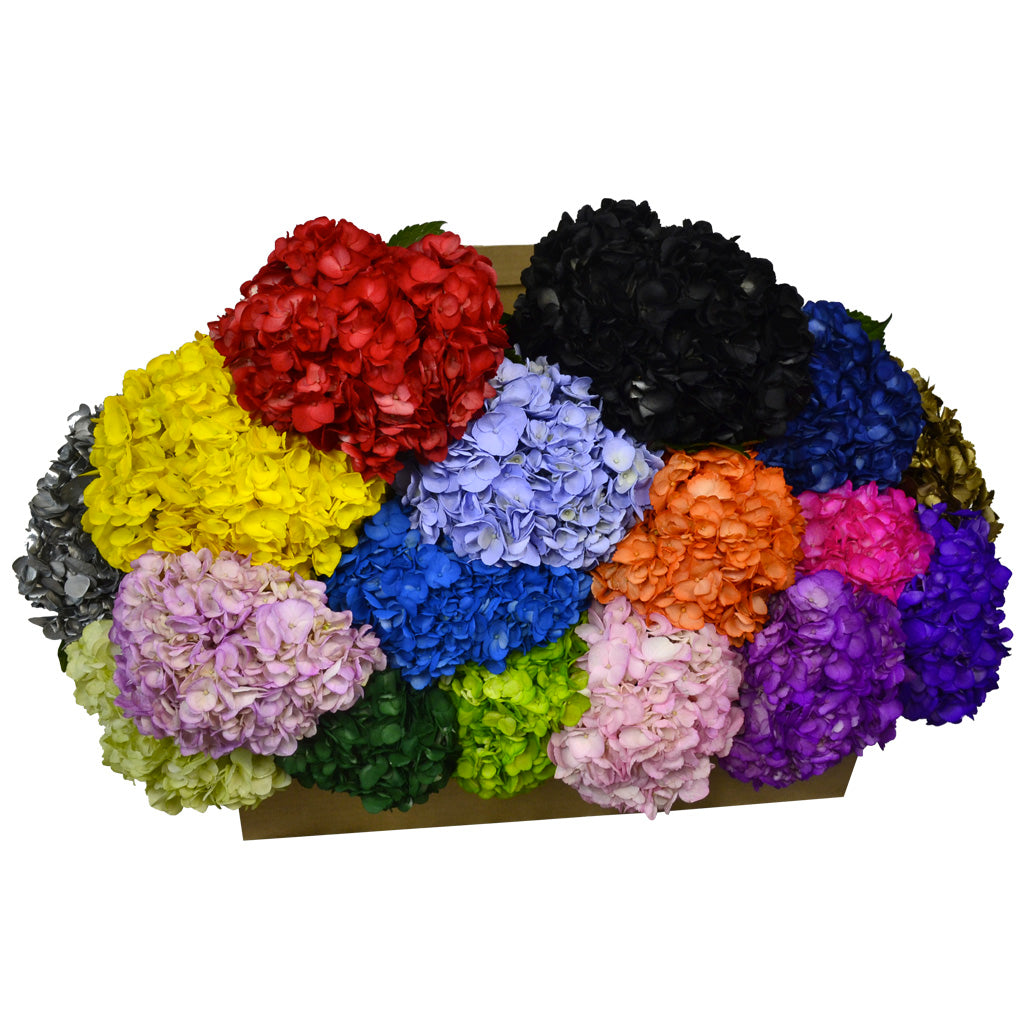 Painted assorted fresh cut hydrangeas flowers. Hydrangeas express feelings of gratitude and they symbolize genuine emotions.
